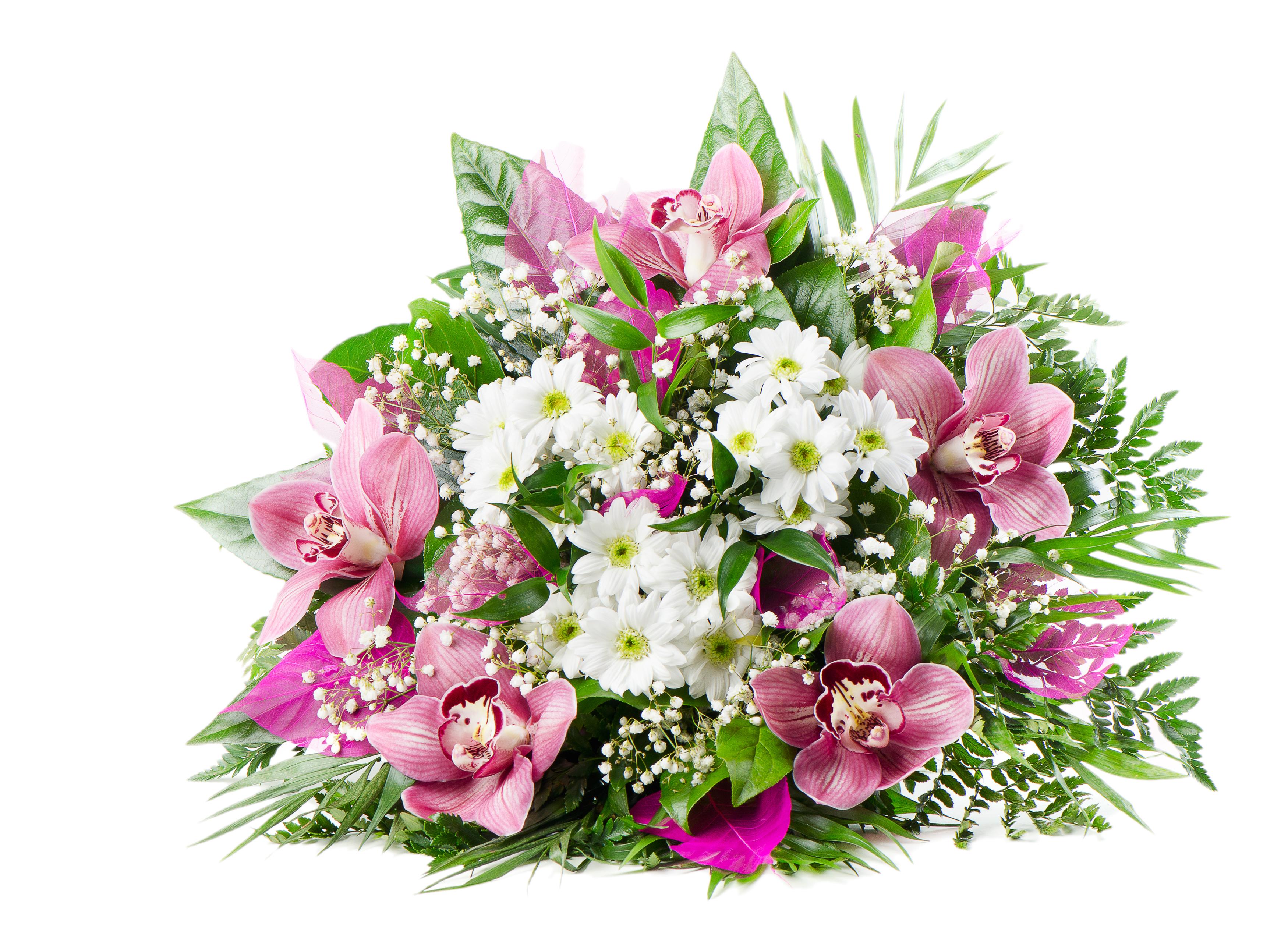 Красивые цветов на белом фоне