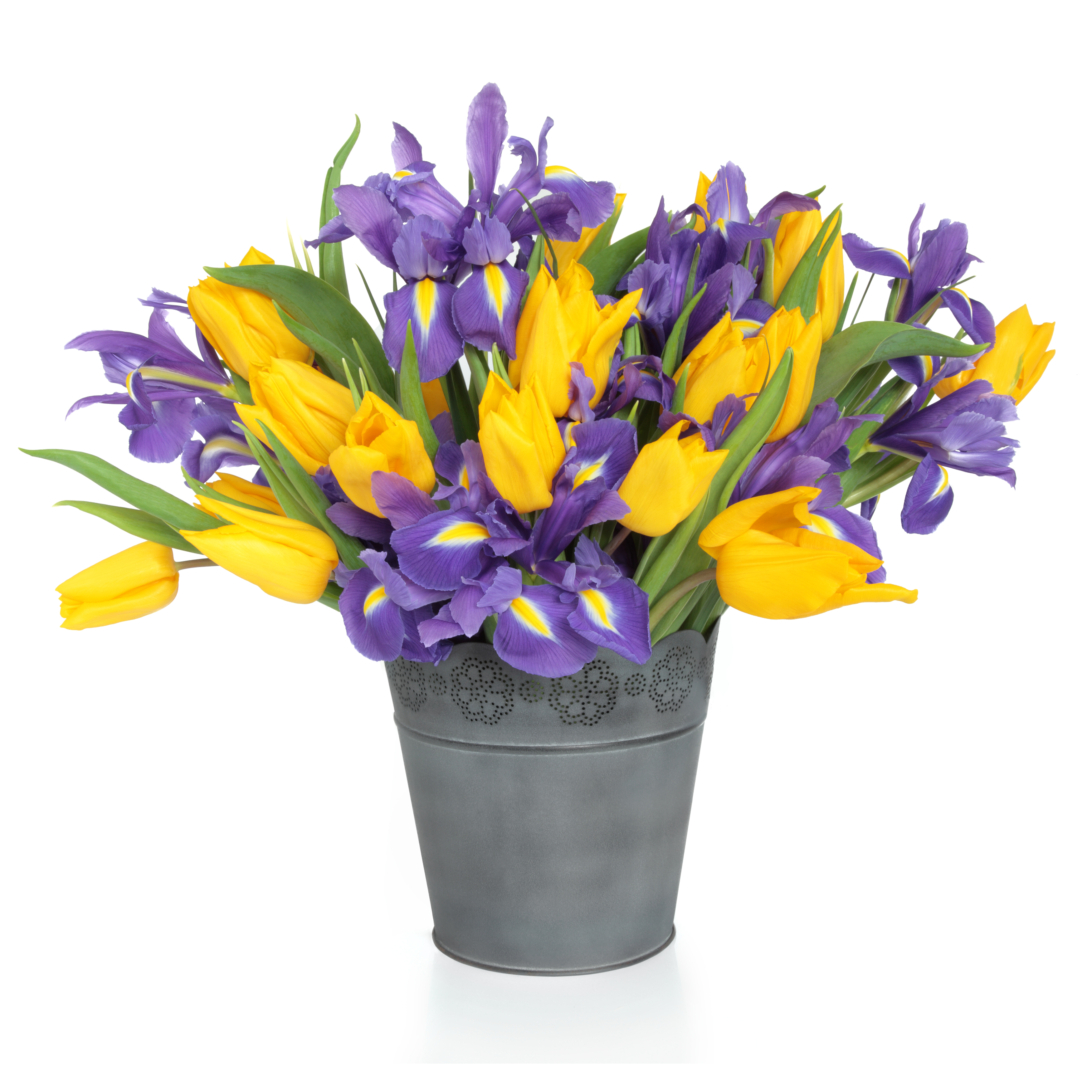 Tulips dhalia fleuriste purple iris and yellow tulip flower arrangement in a distressed metal vase and loose isolated over mightylinksfo
