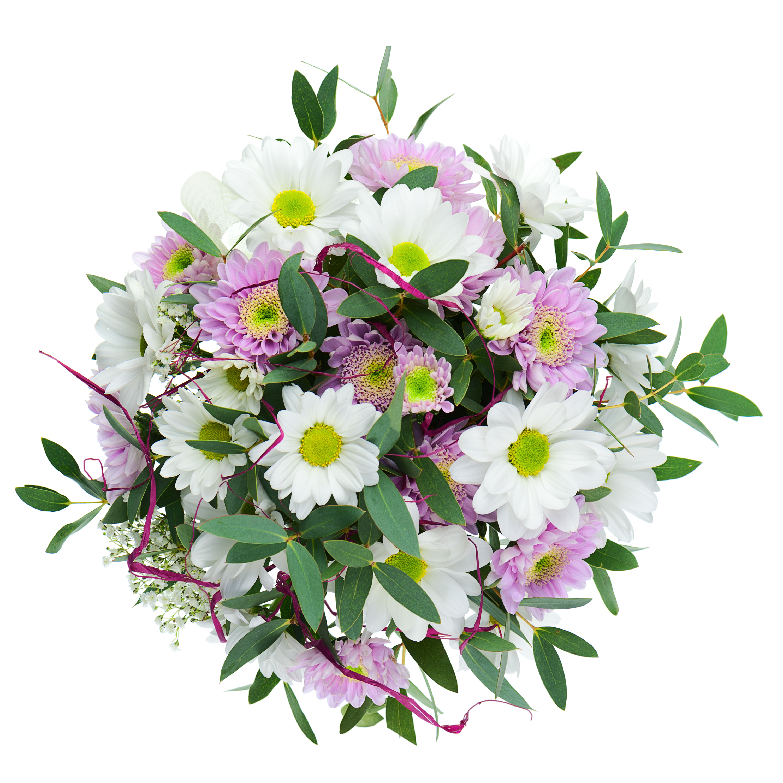 Chrysanthemums Dhalia Fleuriste