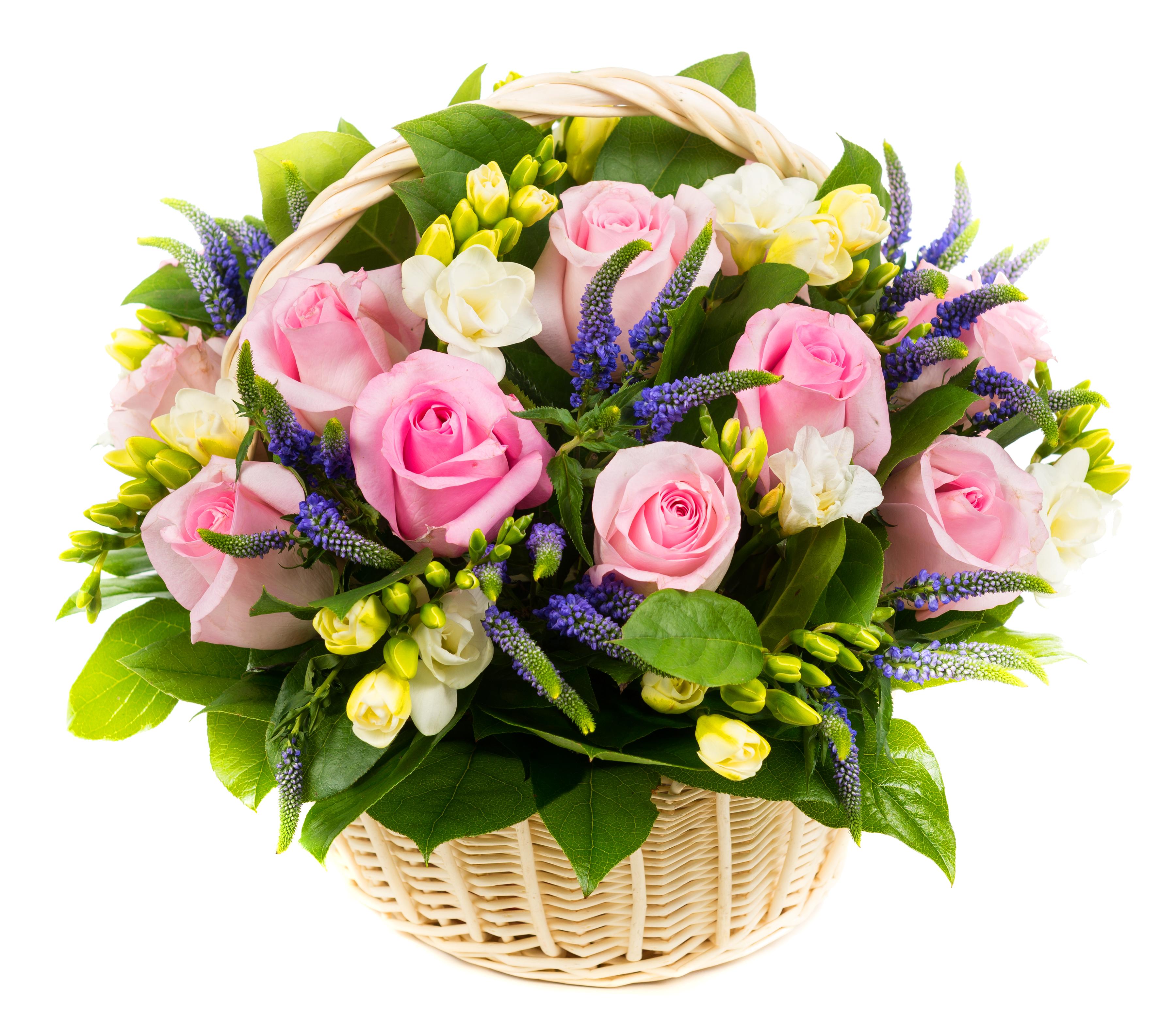 обеспечивает стикеры цветы фото с днем рождения мед противоречивый