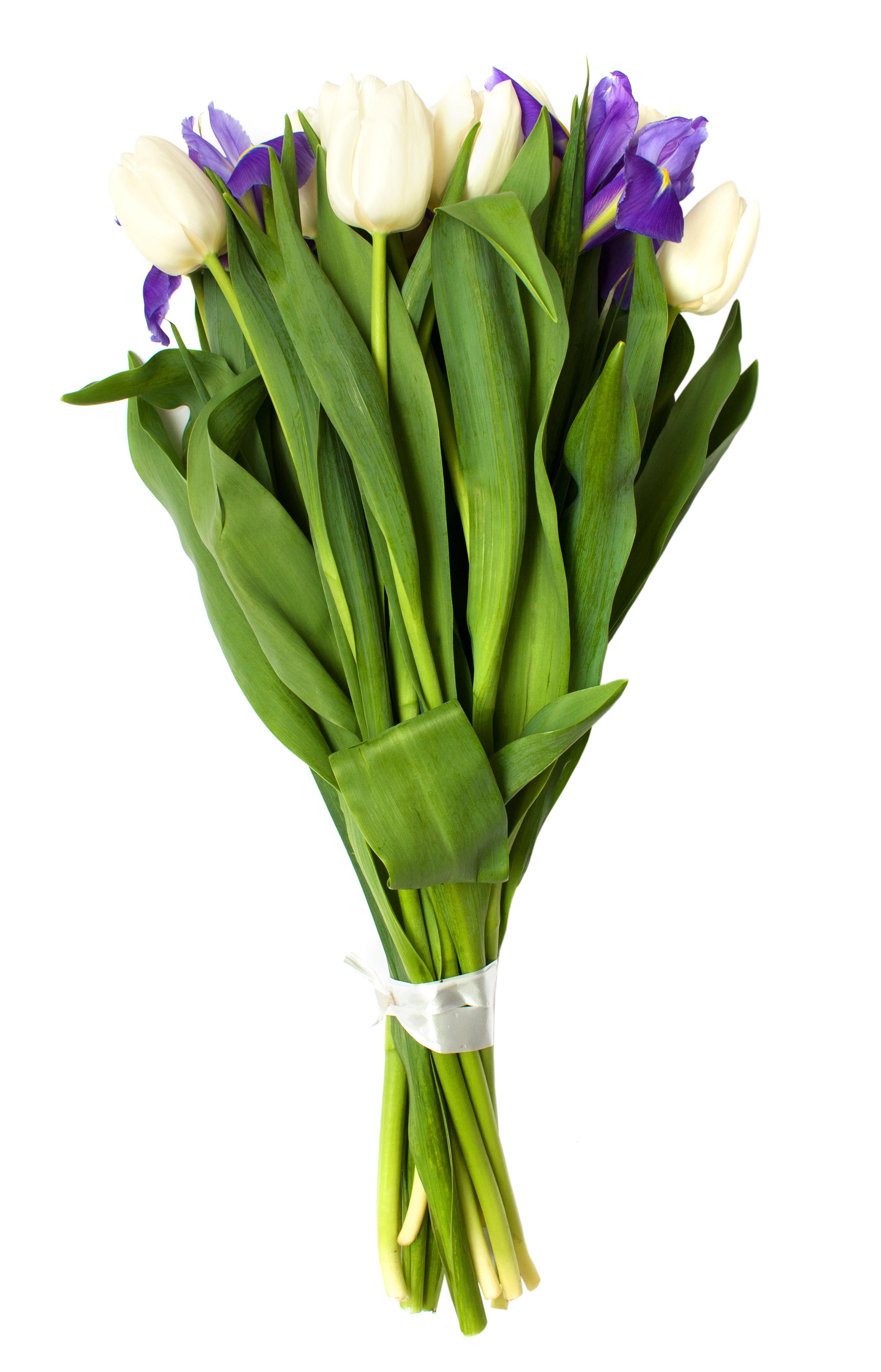 Tulips dhalia fleuriste spring tulips and iris flowers on a white background izmirmasajfo