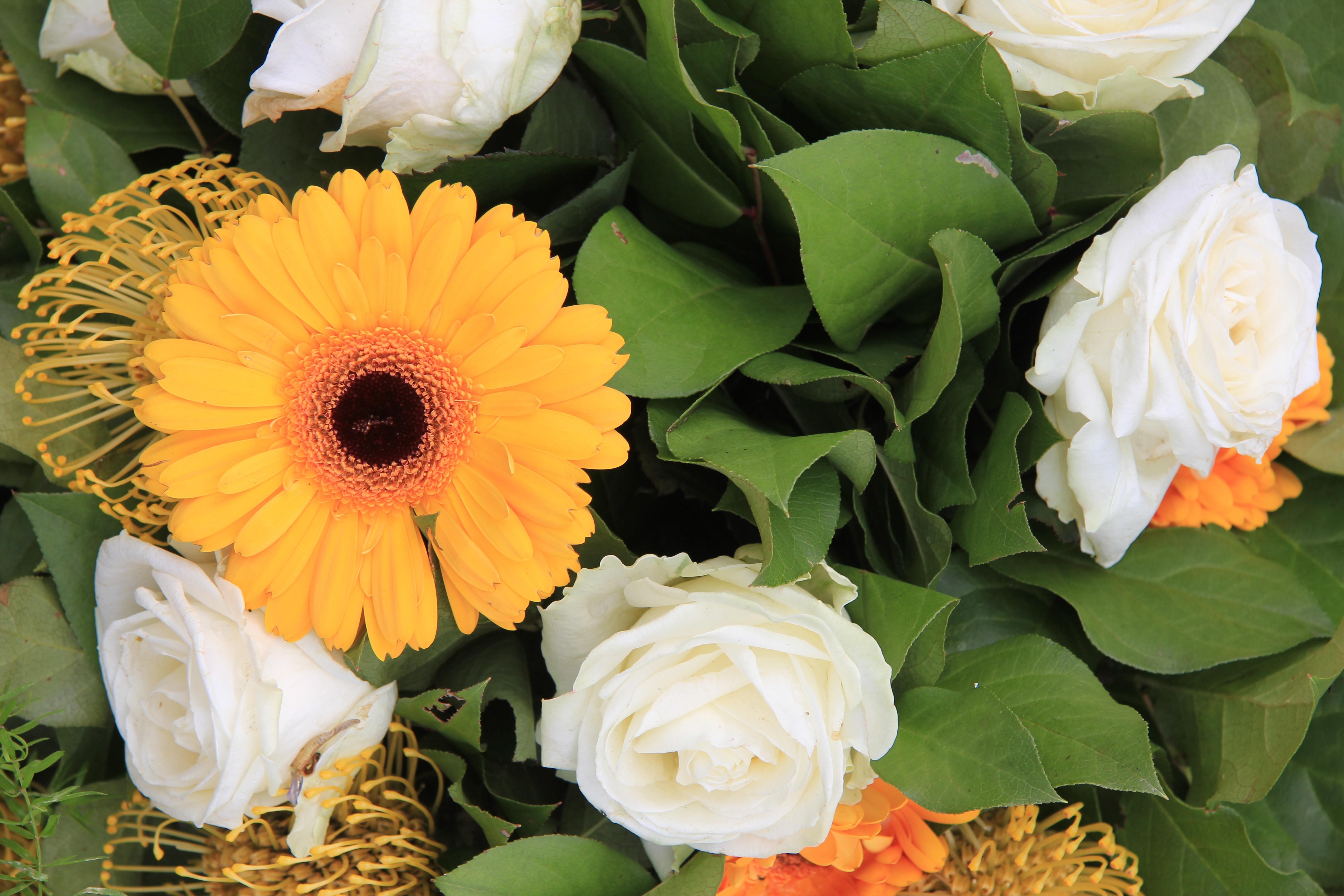 Florist choice – Dhalia Fleuriste